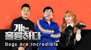 Photo of Dogs are Incredible Episode 83 Eng Sub